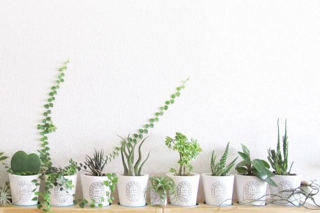 観葉植物を部屋に置こう