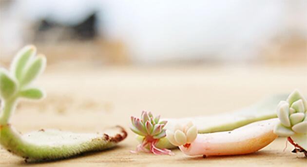 部屋に植物を置いて癒やし空間を作りませんか?