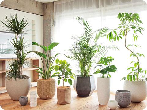 部屋に植物を置いて癒やし空間を作る